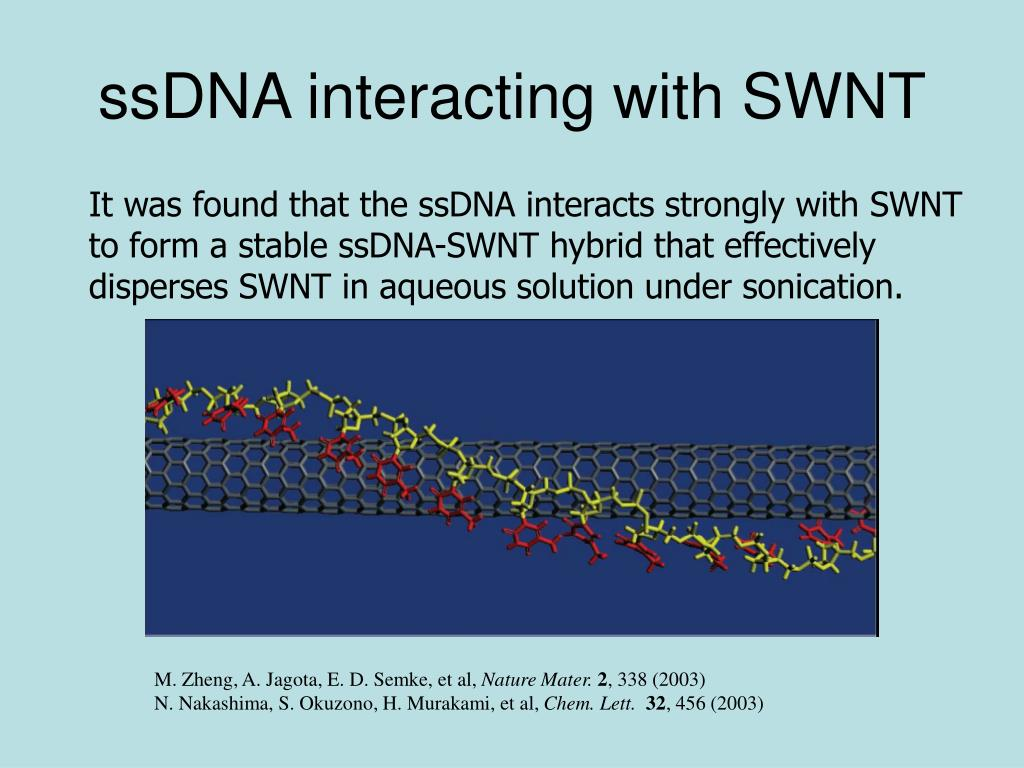 ssDNA interacting with SWNT