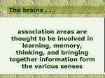 the brains31