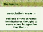 the brains32