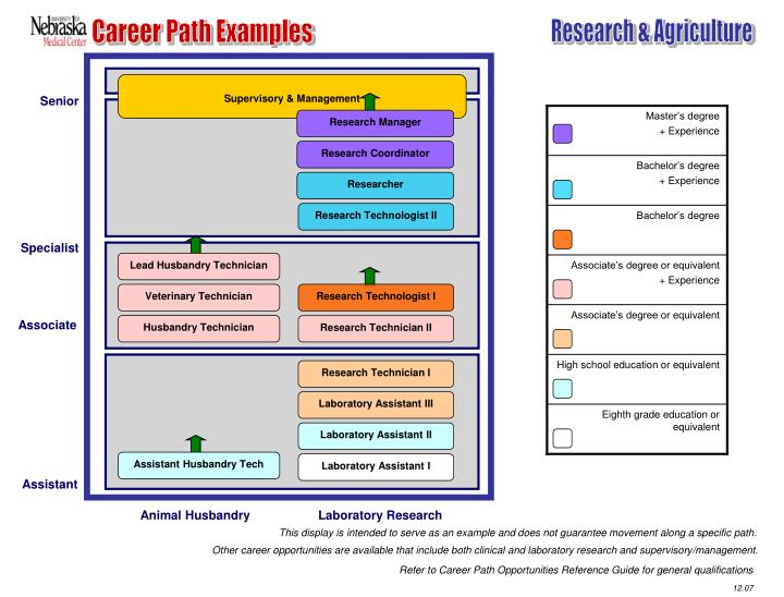 Career Path Examples
