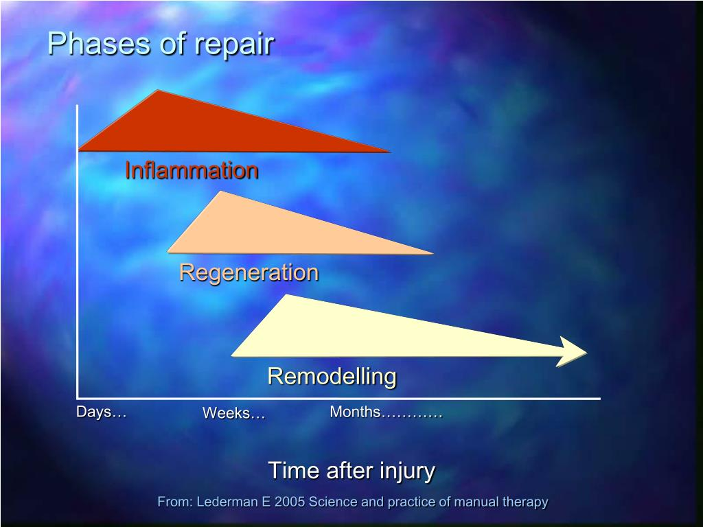 Phases of repair