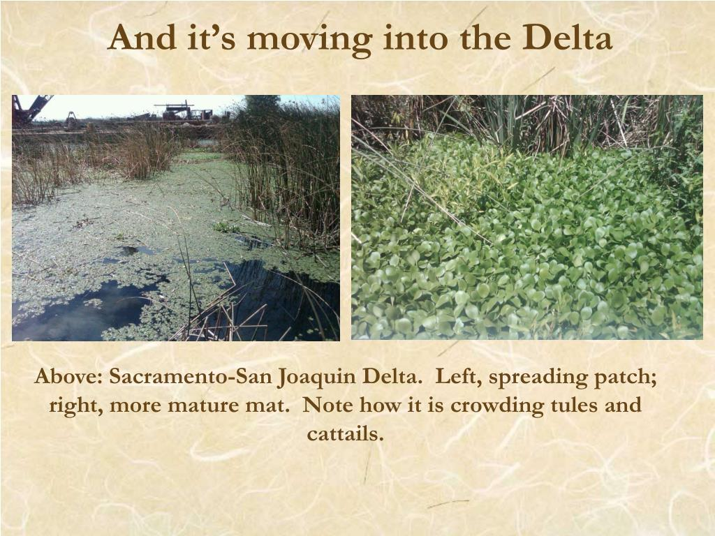 And it's moving into the Delta