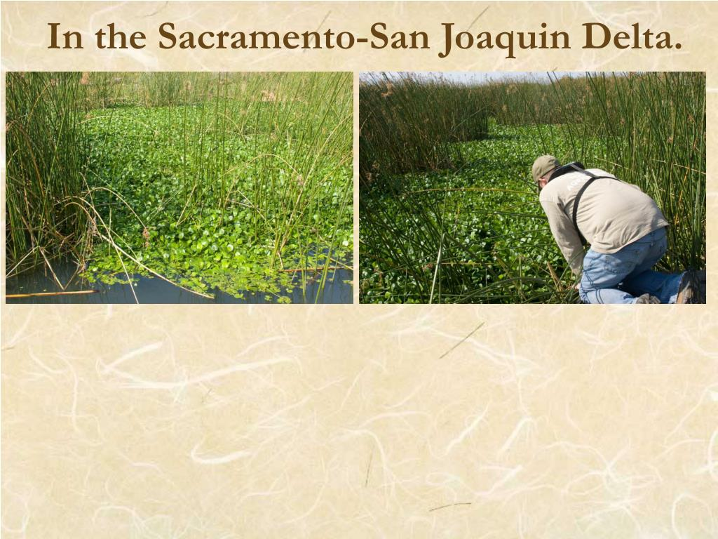 In the Sacramento-San Joaquin Delta.