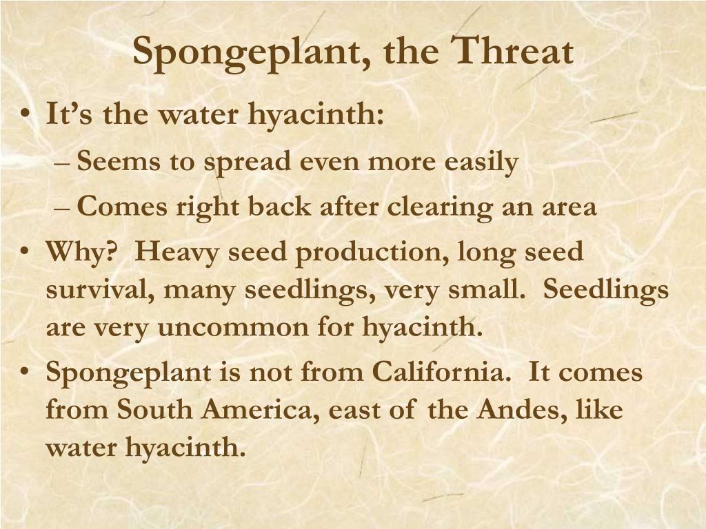 Spongeplant, the Threat