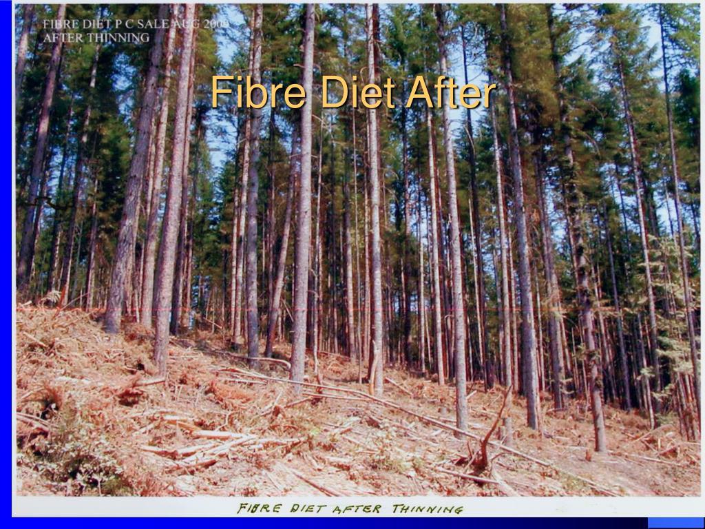 Fibre Diet After
