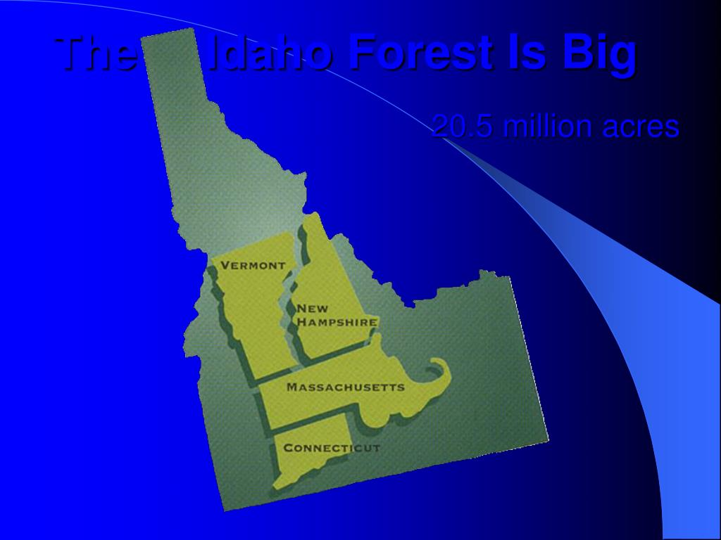 The     Idaho Forest Is Big