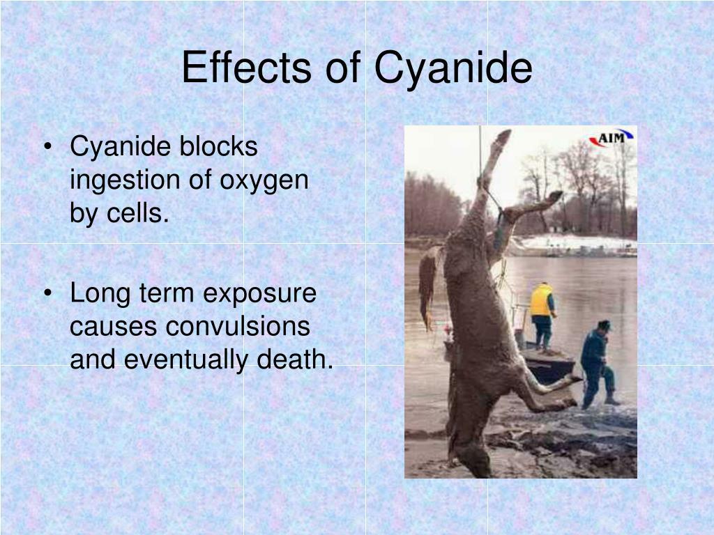 Effects of Cyanide