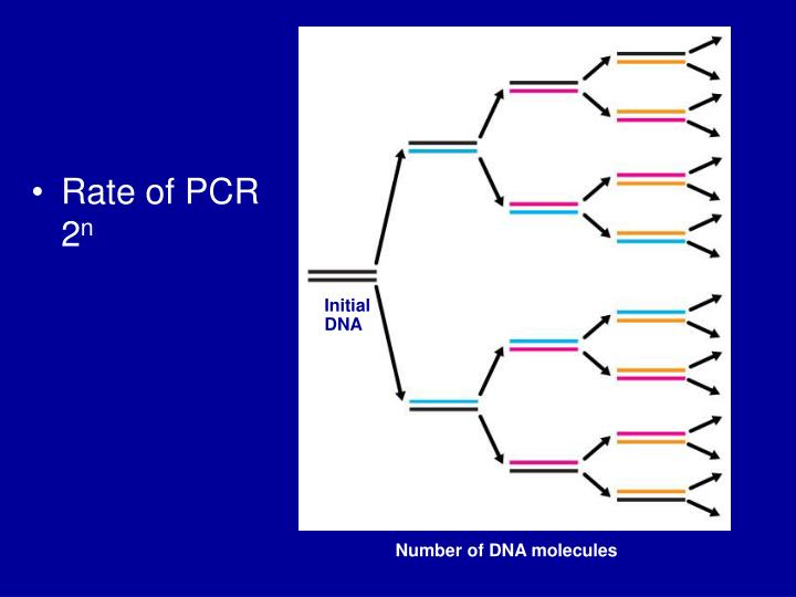 Rate of PCR   2