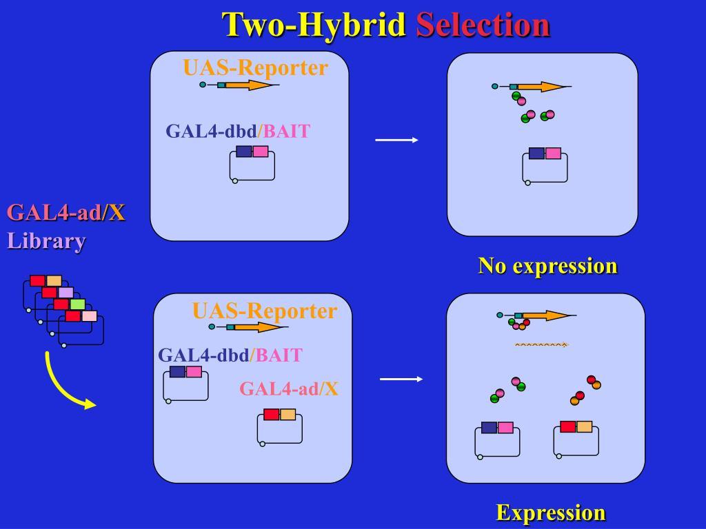 Two-Hybrid