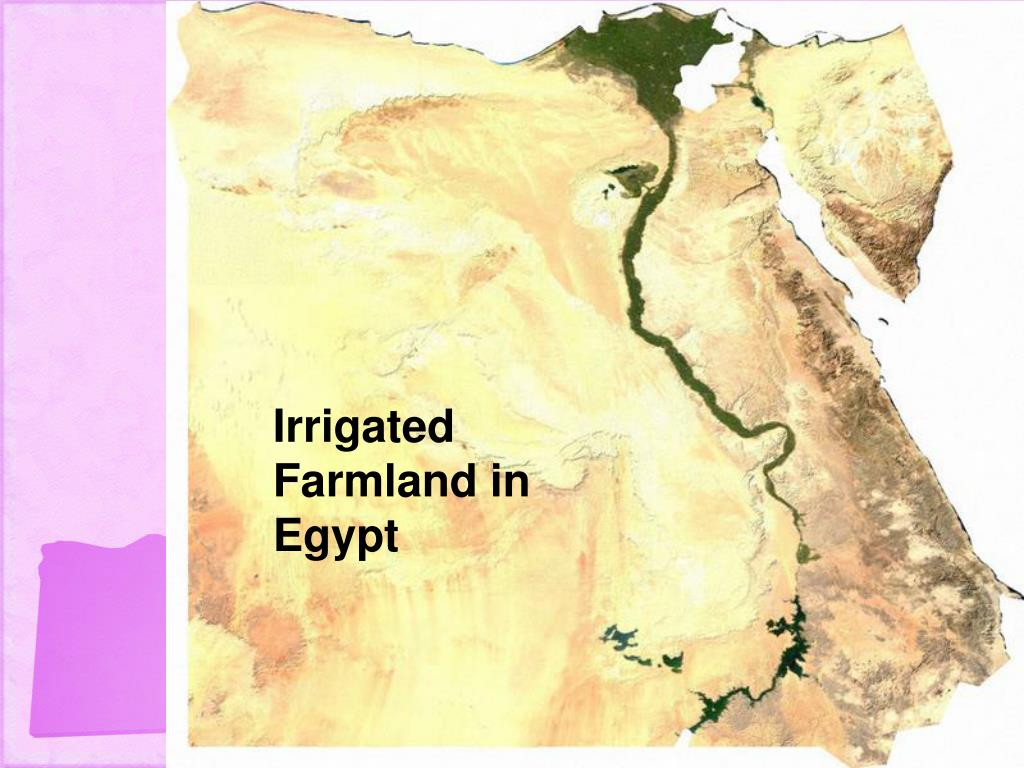 Irrigated Farmland in Egypt