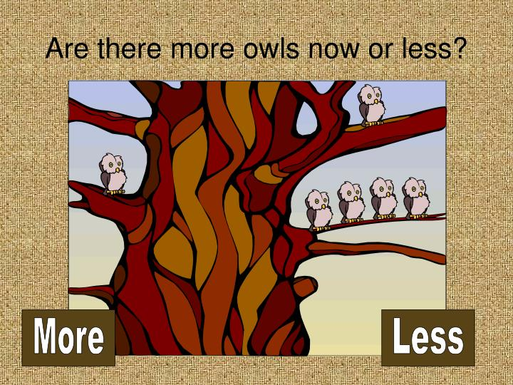 Are there more owls now or less
