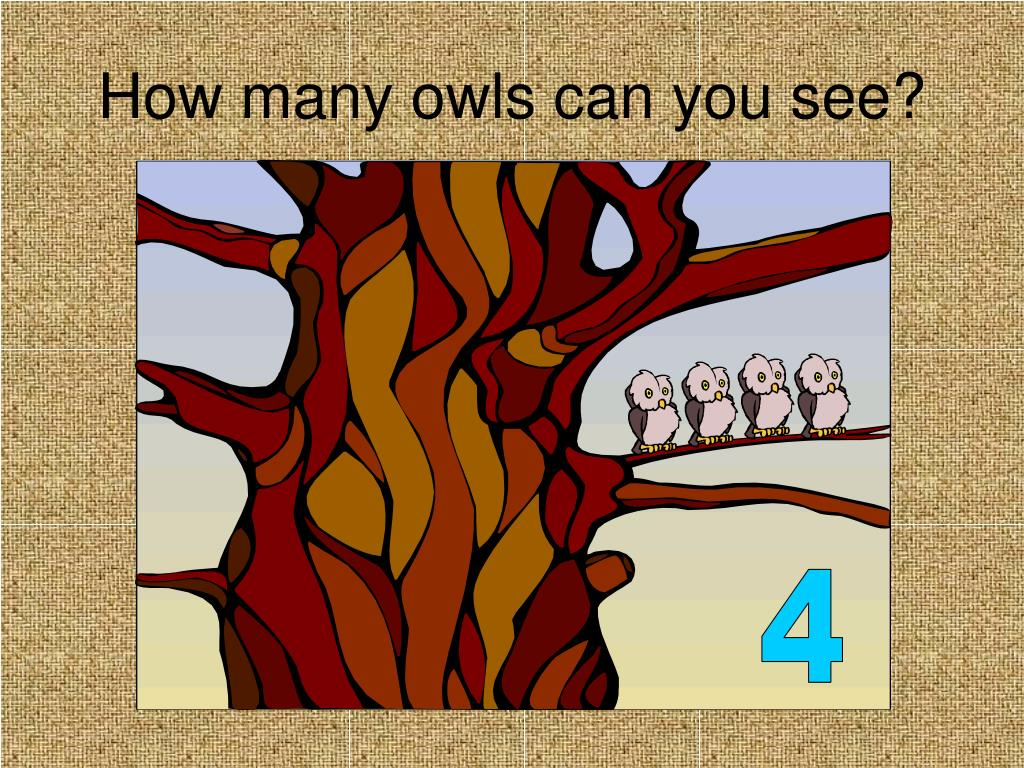 How many owls can you see?