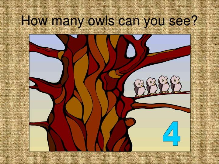 How many owls can you see