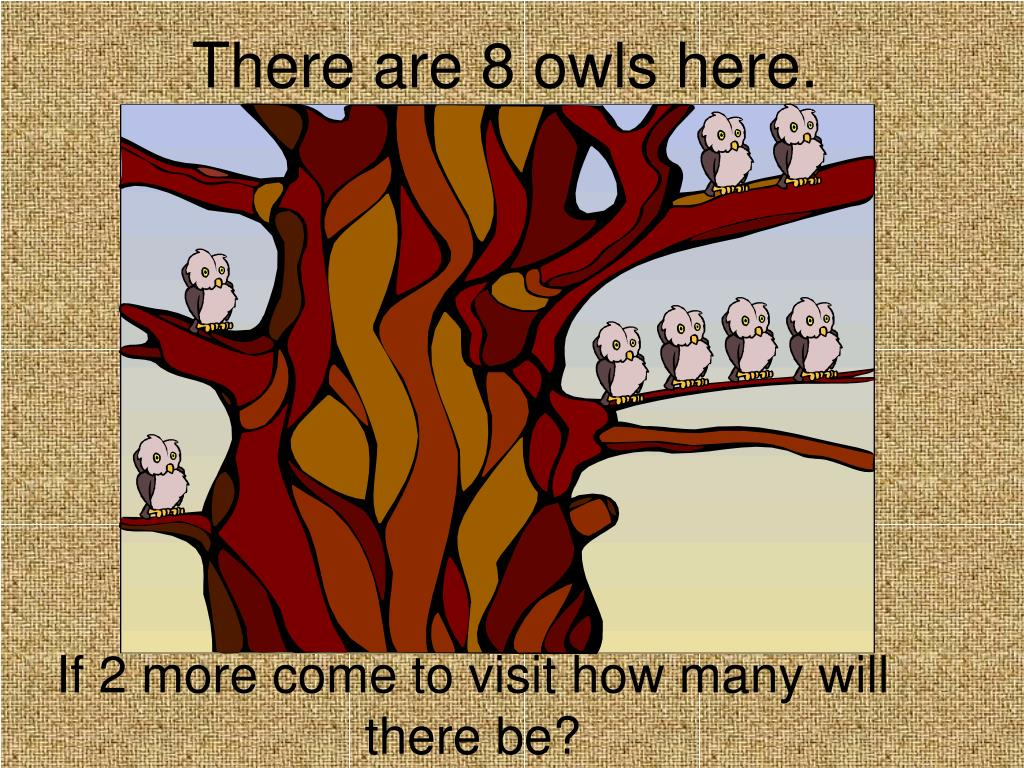 There are 8 owls here.