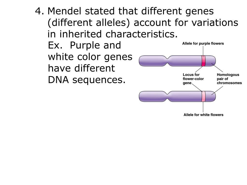Mendel stated that different genes