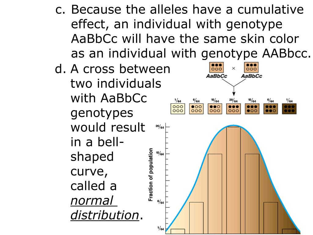 Because the alleles have a cumulative