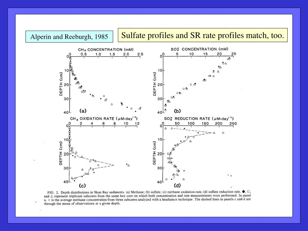 Sulfate profiles and SR rate profiles match, too.