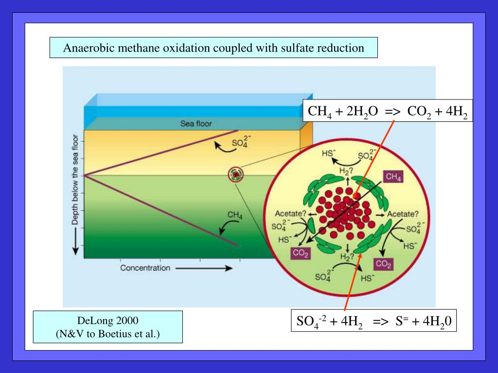 Anaerobic methane oxidation coupled with sulfate reduction