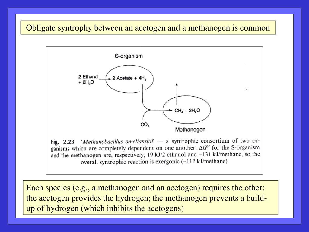 Obligate syntrophy between an acetogen and a methanogen is common