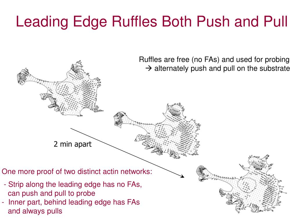 Leading Edge Ruffles Both Push and Pull