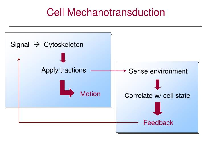 Cell Mechanotransduction