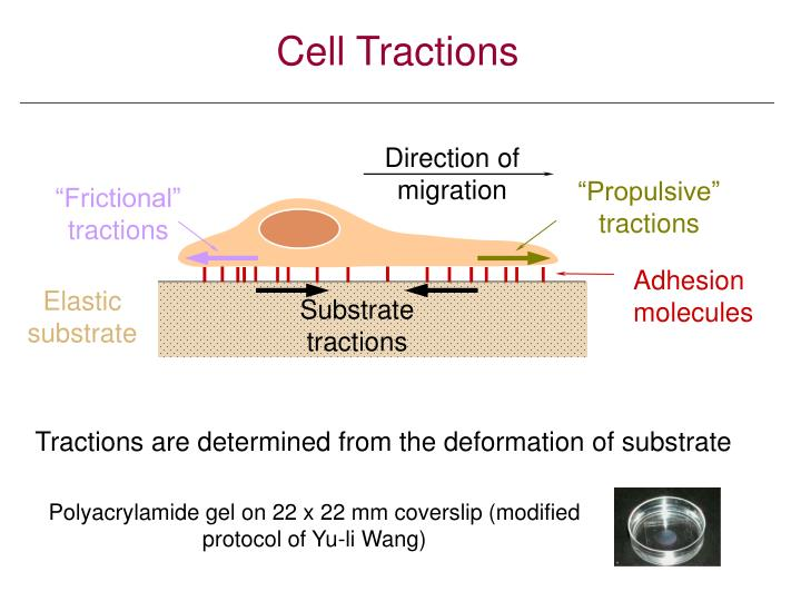 Cell Tractions