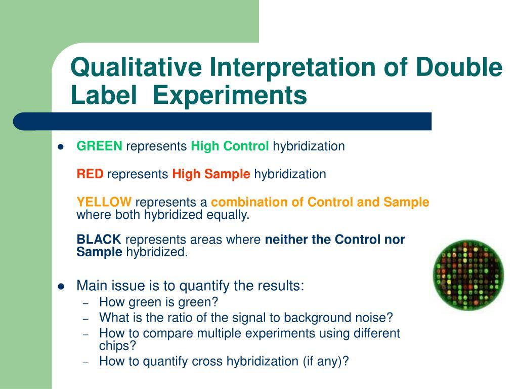 Qualitative Interpretation of Double Label  Experiments
