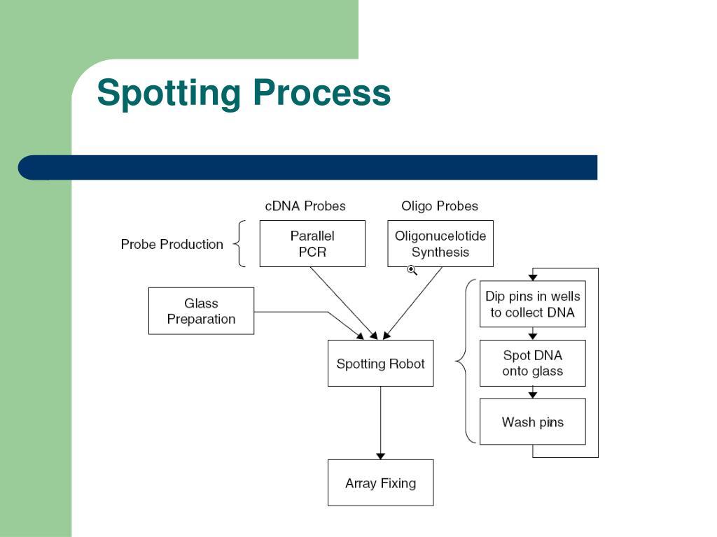 Spotting Process