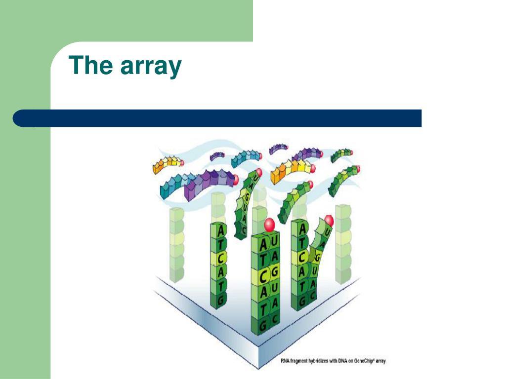 The array