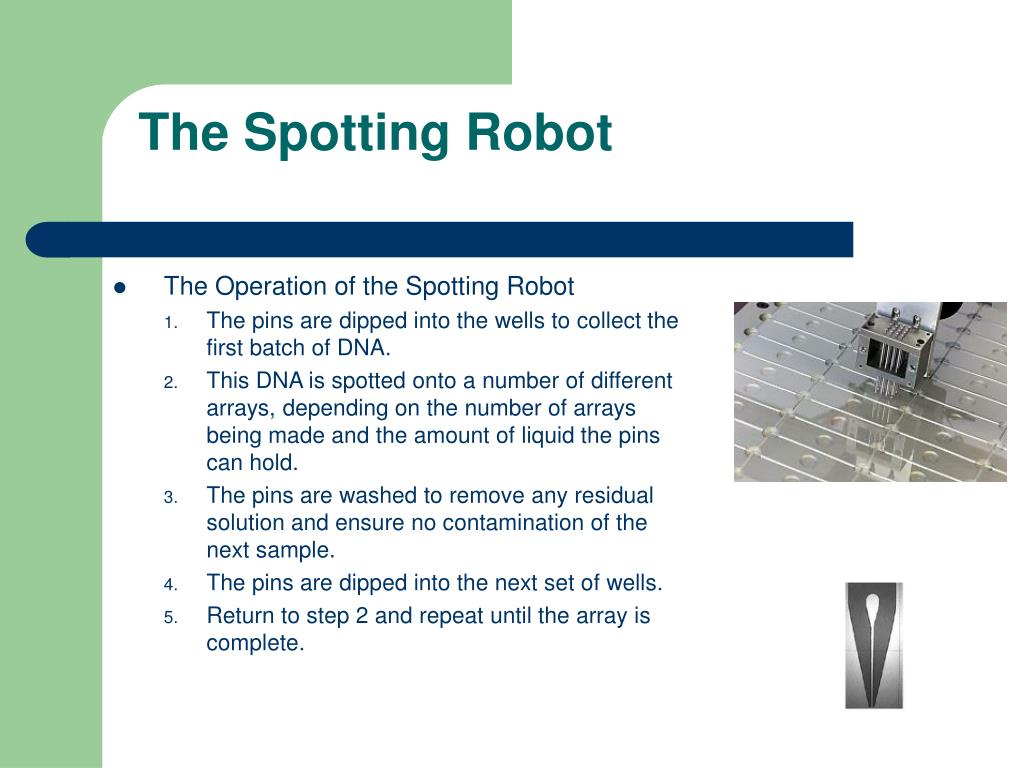 The Spotting Robot