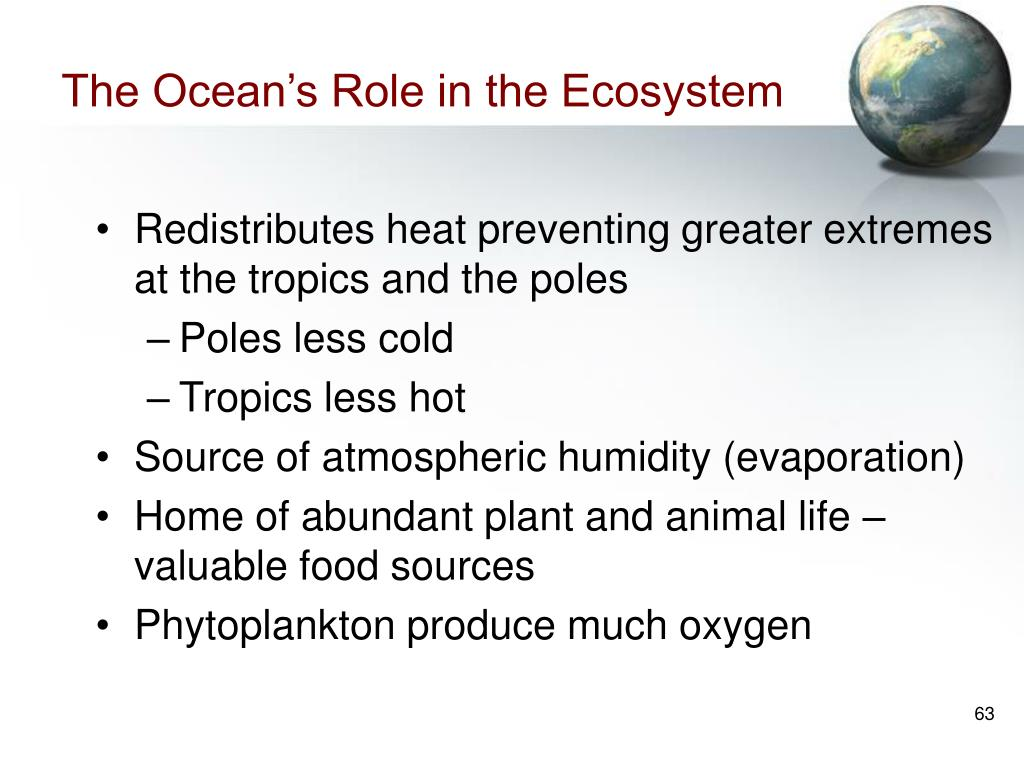 The Ocean's Role in the Ecosystem