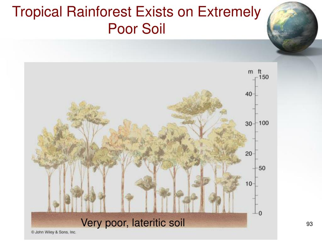 Tropical Rainforest Exists on Extremely Poor Soil