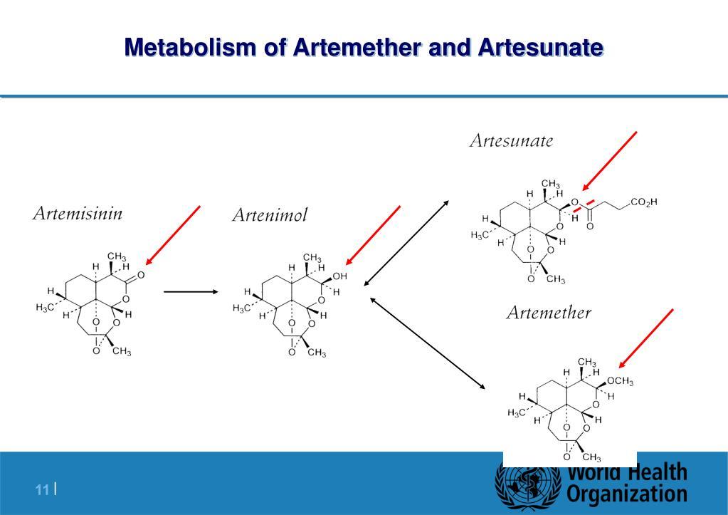 Metabolism of Artemether and Artesunate