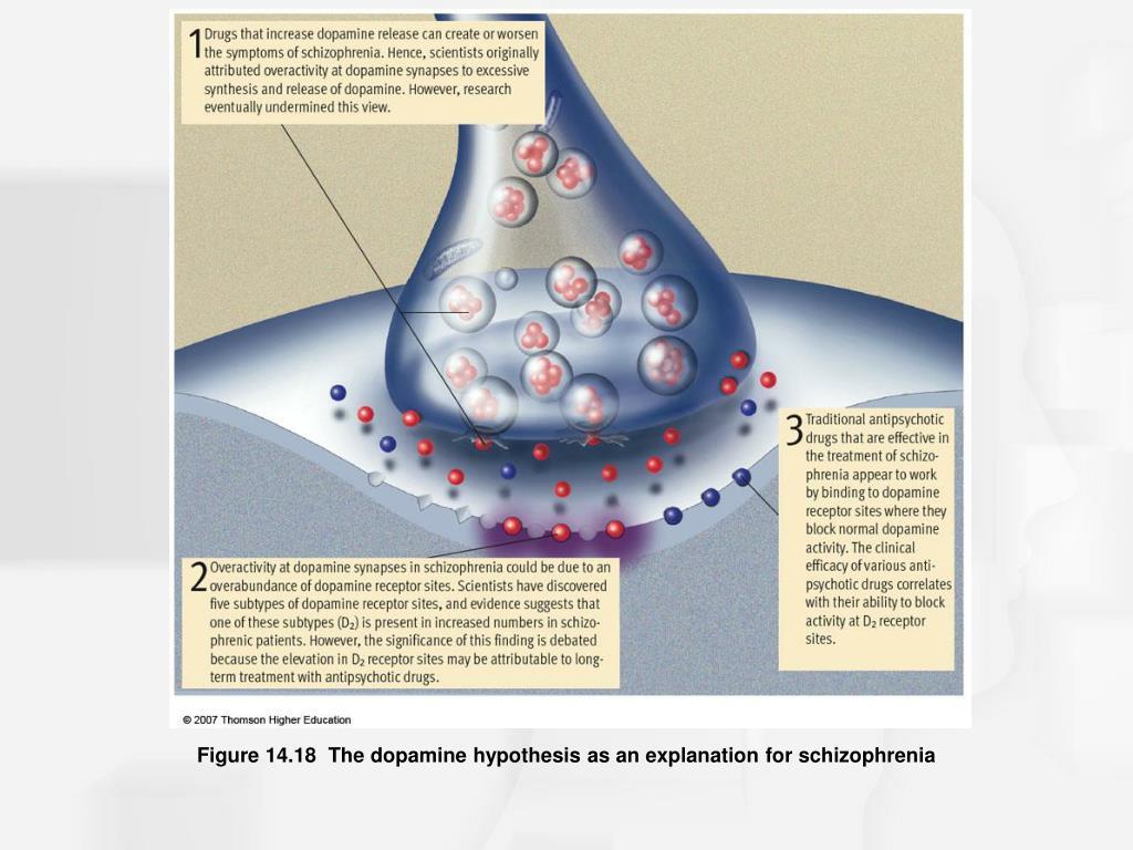 Figure 14.18  The dopamine hypothesis as an explanation for schizophrenia