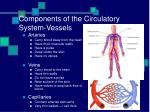 components of the circulatory system vessels