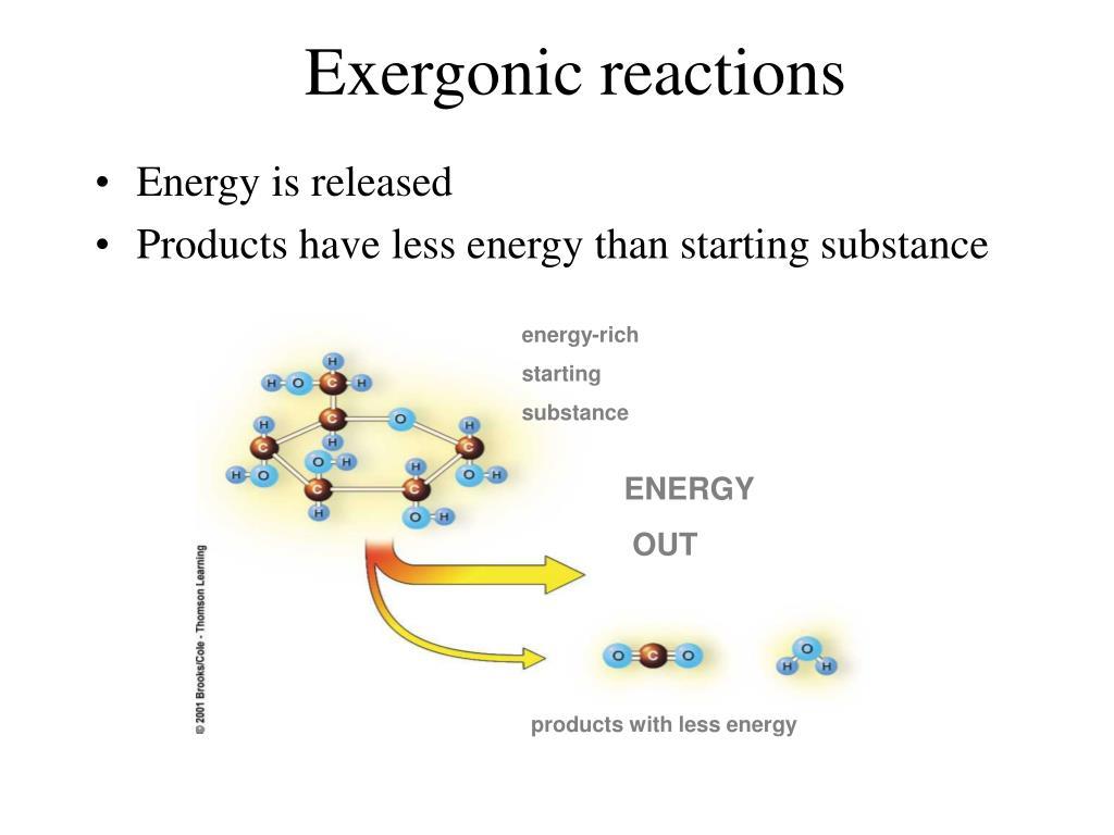 Exergonic reactions