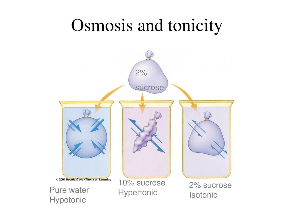 Osmosis and tonicity