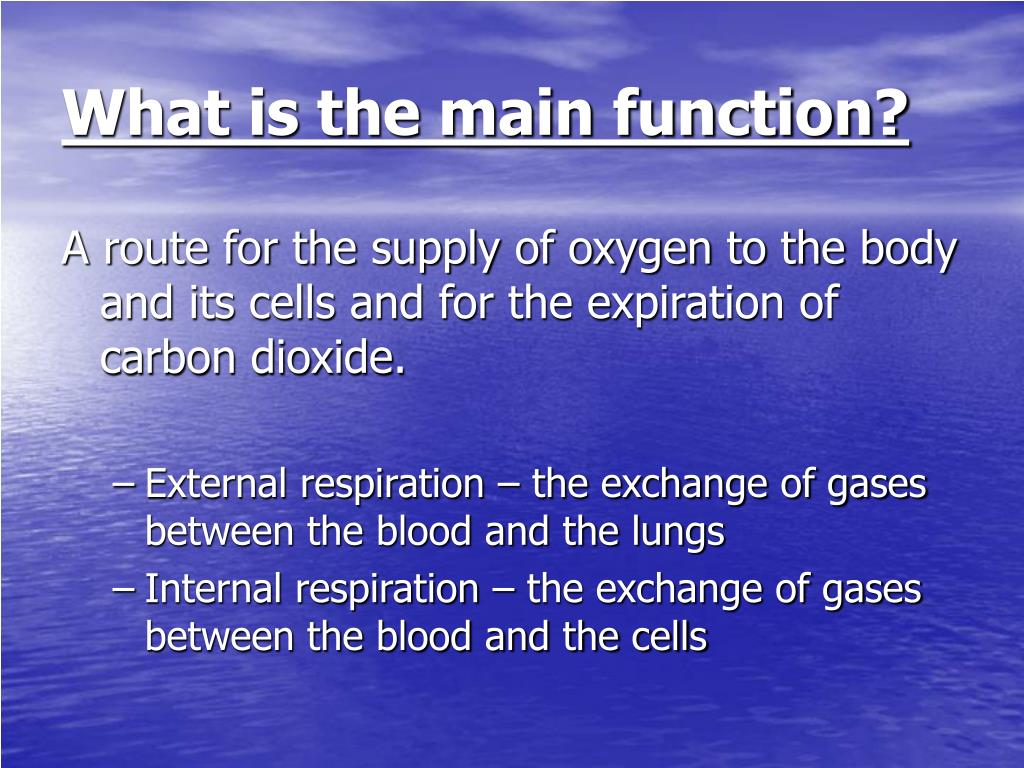 What is the main function?