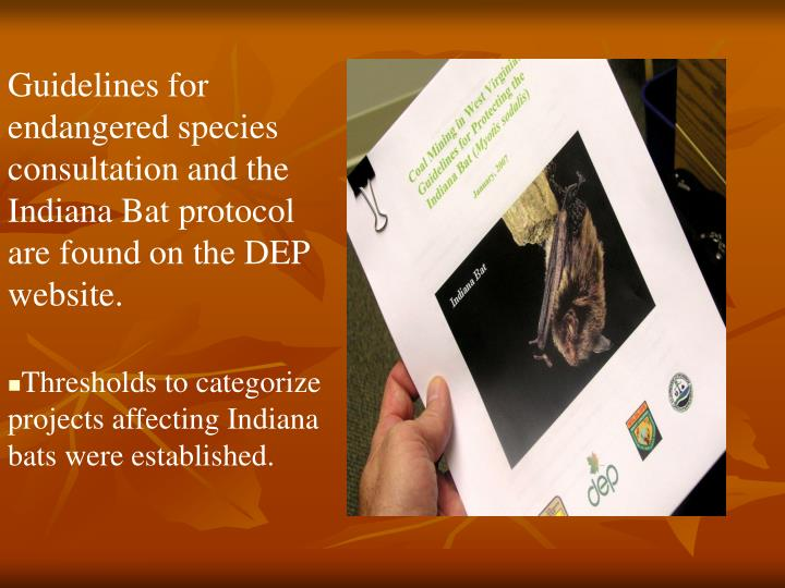 Guidelines for endangered species consultation and the Indiana Bat protocol are found on the DEP website.