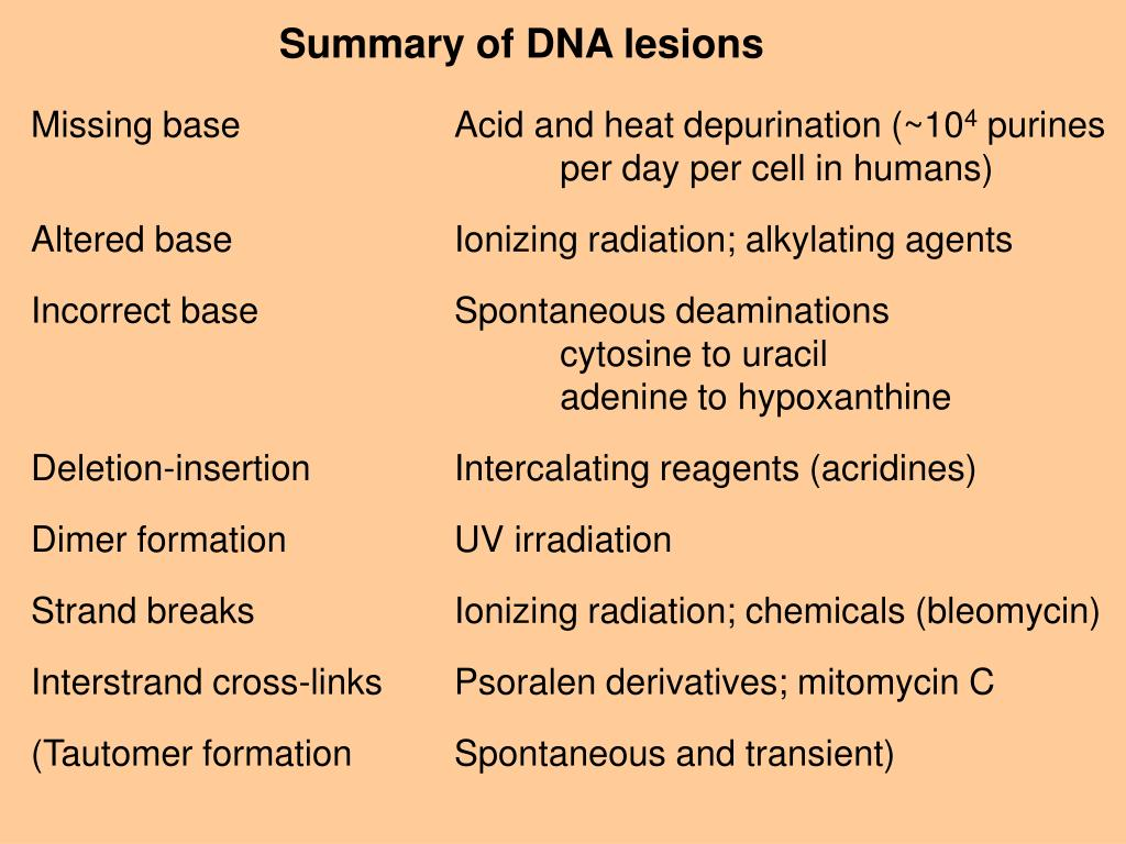 Summary of DNA lesions