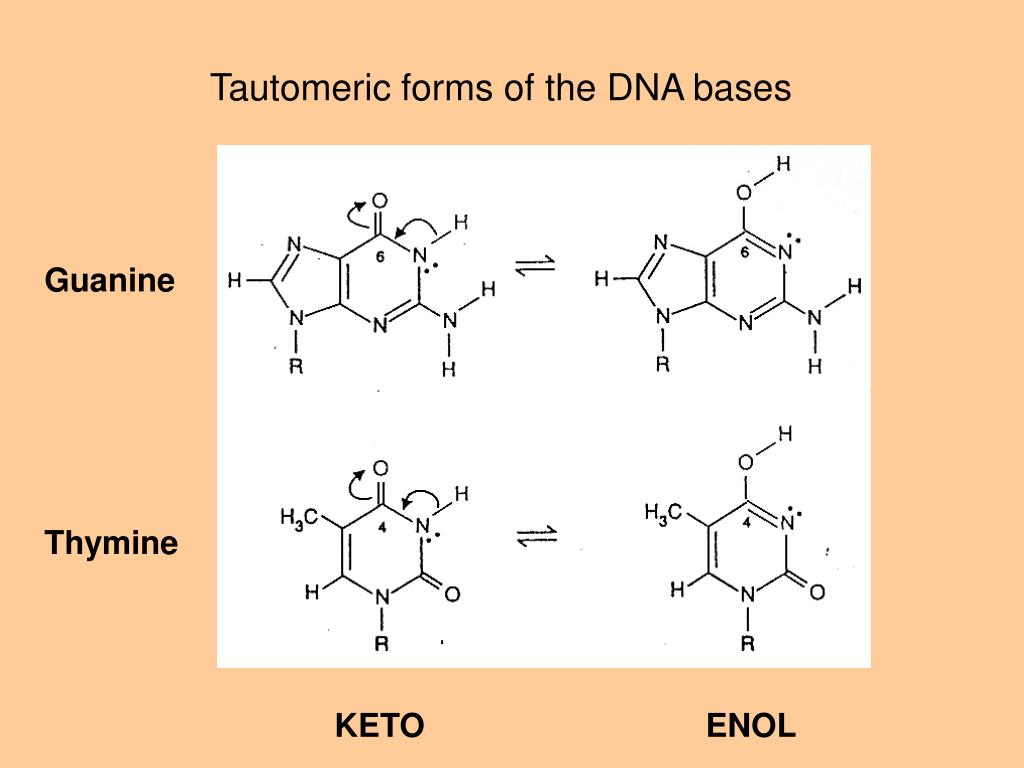 Tautomeric forms of the DNA bases