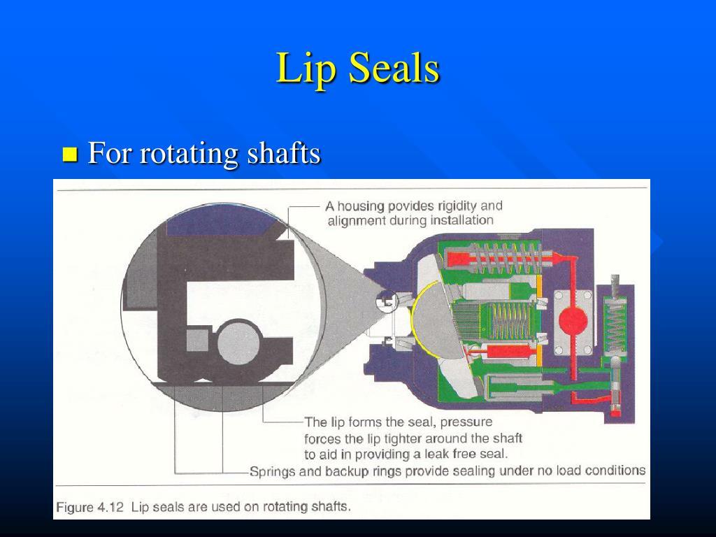 Lip Seals