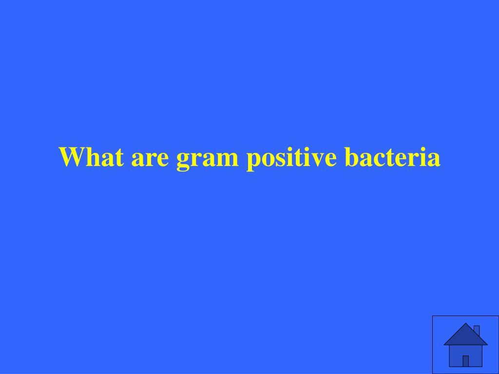 What are gram positive bacteria
