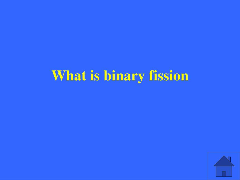 What is binary fission