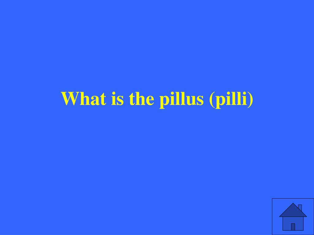What is the pillus (pilli)