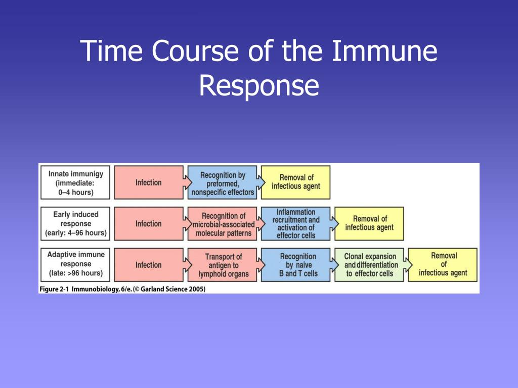 Time Course of the Immune Response
