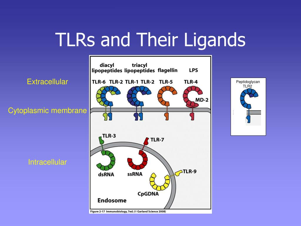 TLRs and Their Ligands