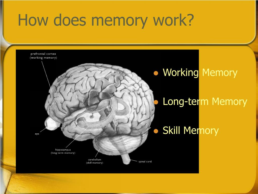 How does memory work?