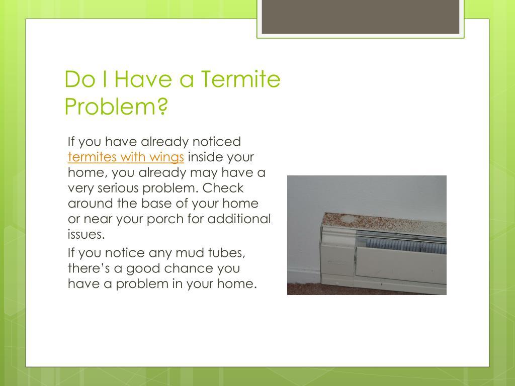 Do I Have a Termite Problem?