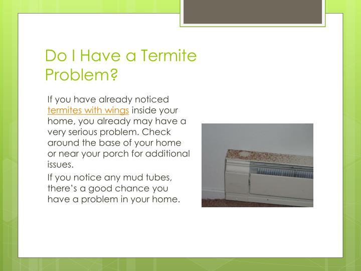 Do i have a termite problem
